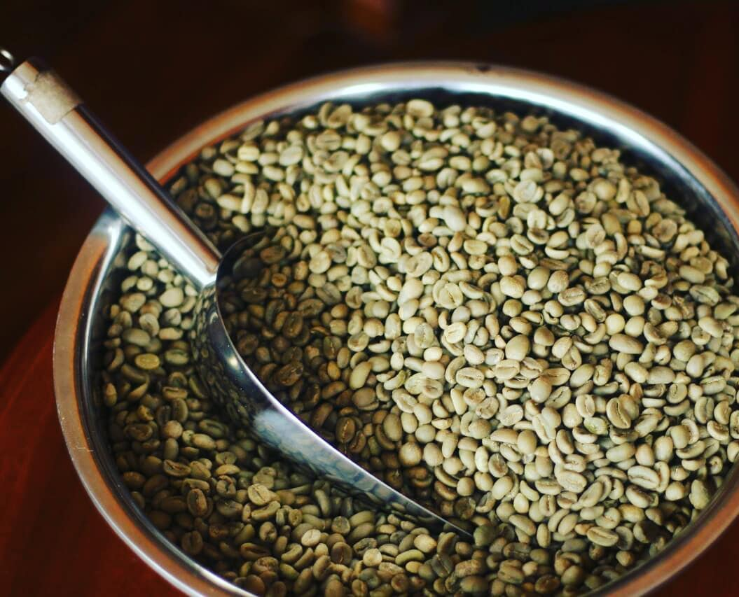 Green Bean Arabika Gayo Luwak Liar